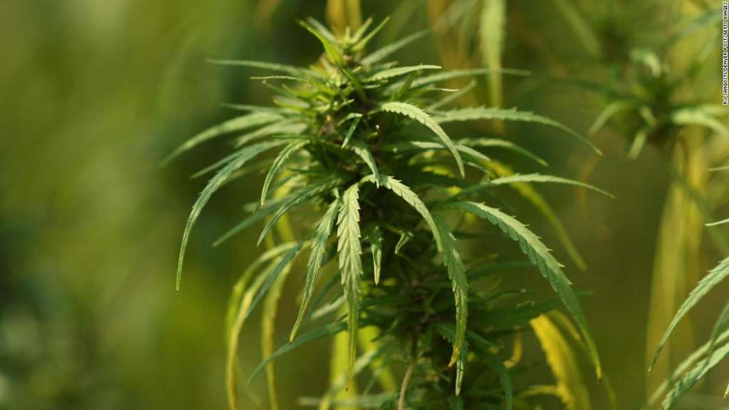 that are out there. Now CBDs are being legalized and there are other states that are legalizing more than that.