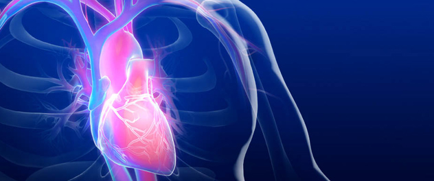 What are the different kinds of cardiovascular specialists?