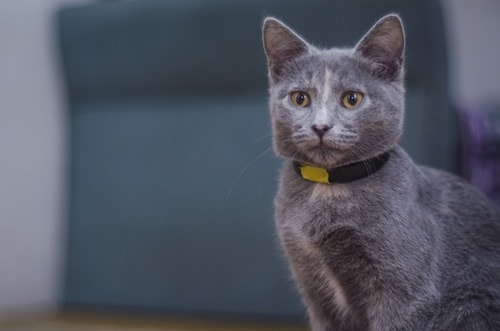 Right Cat Collar for Your Cat