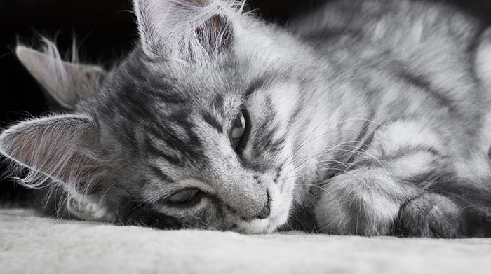 Cat Anxiety – How You Can Deal With It