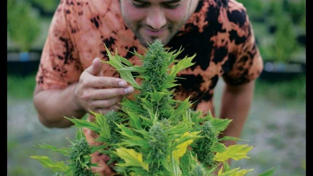 bulk weed